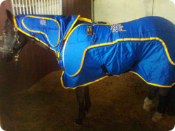 Cyclo-Ssage Rug Therapy for Horses