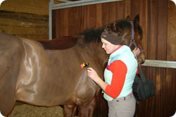 Low Level Laser Therapy for Horses and Dogs