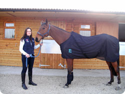 Magnetic Rug Therapy for Horses