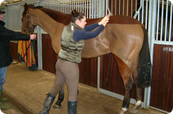 McTimoney-Corley Spinal Manipulation for horses