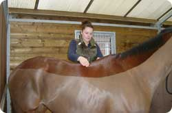 The equine therapist performing merishia massage on a horse