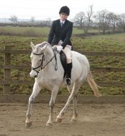 dressage horse helped with thermal imaging and massage