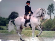 Dressage Horses for McTimoney-Corley & Laser Therapy